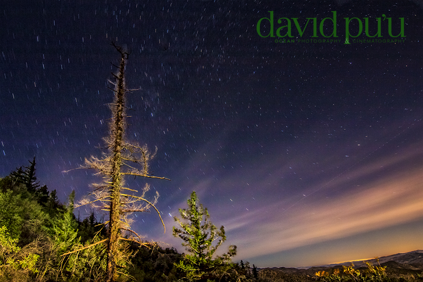 Lights from passing cars lit up the tree line, as I shot a time lapse. This is one frame from it.